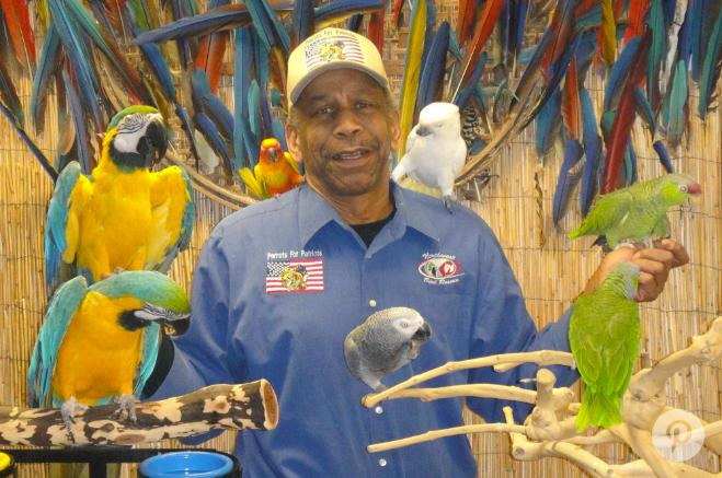 Parrots for Patriots Program Provides Vets Feathered Pets