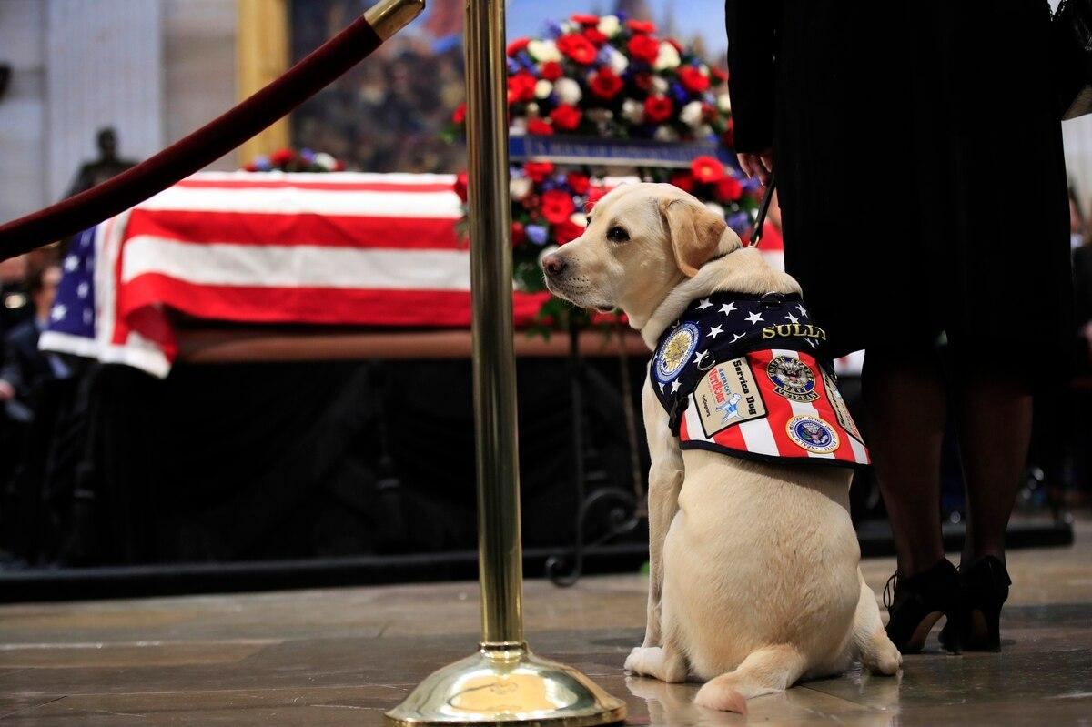 Statue to be made in honor of Sully, service dog for the late President George H.W. Bush