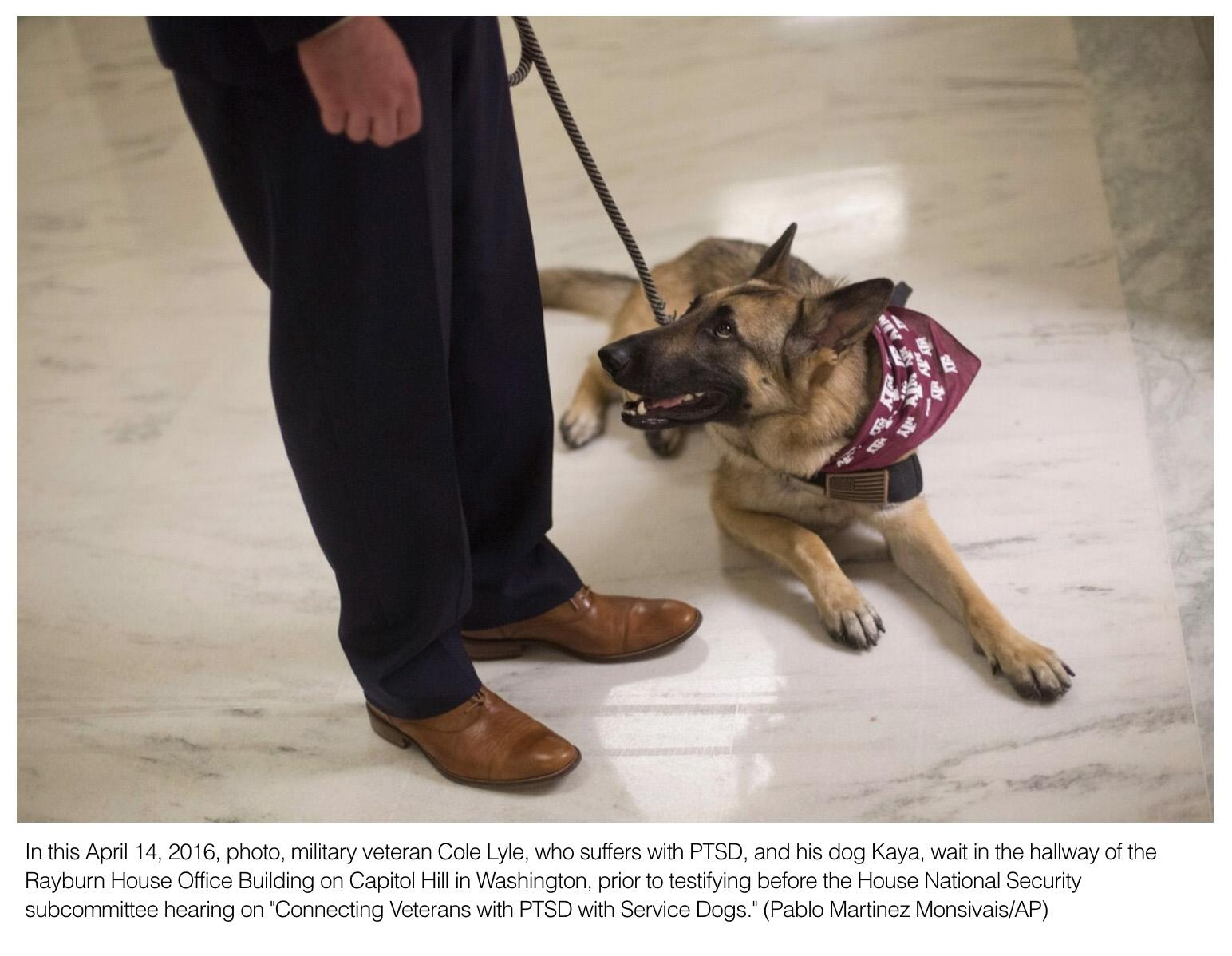 Is adopting a service dog right for you? What veterans diagnosed with PTSD need to know