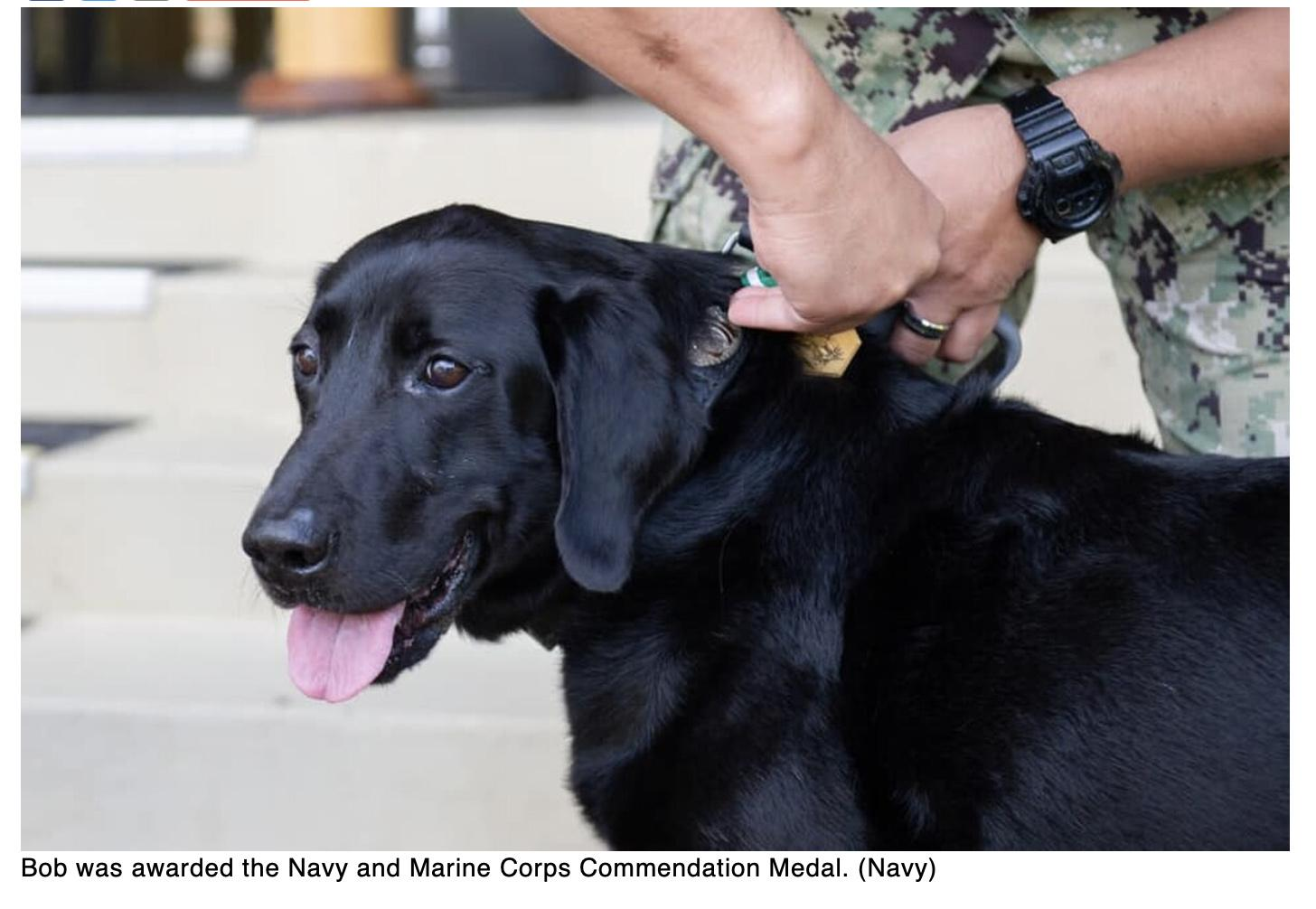 Sailors send off Bob — a very good military working dog — after a stellar career