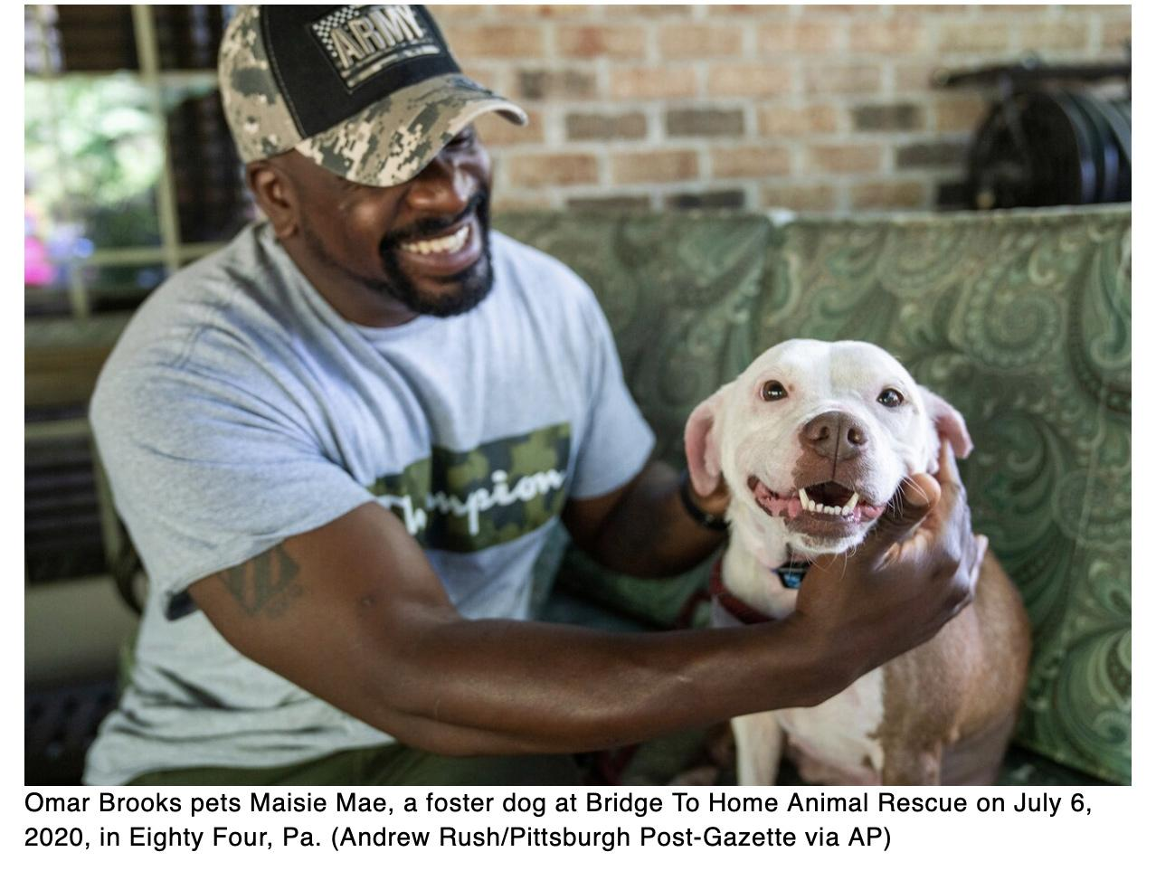 Army vet finds peace fostering pets, finding them homes